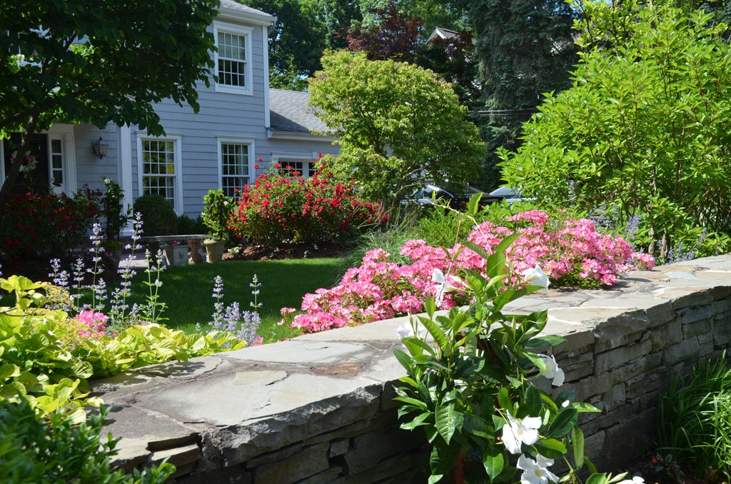 Colorful Flowering Plants For Curb Appeal Tode Landscape