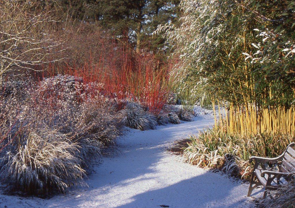 Exceptional Winter Landscape New Jersey Garden Path Snow